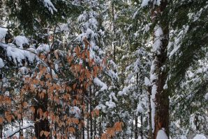 Conifer and deciduous by Alaalooe