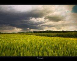 Wheat field by SasoSi