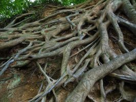 Roots 2 by AlissaDStock