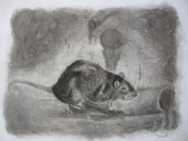 brown rat by Aswulf