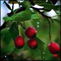 Red raindrops by airdo