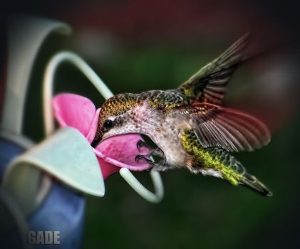 Humming Bird2 by Jimmer1220