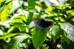 Butterfly Kisses by jguy1964