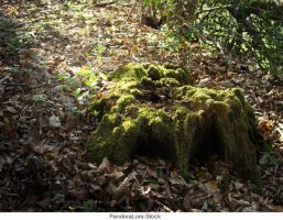 Tree Stump 25 by AnitaJoy-Stock