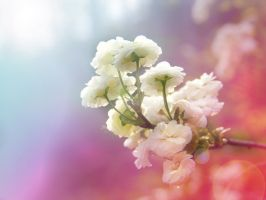 A Gentle Spring by Morna
