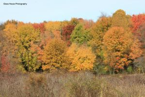 Autumn's Fire by GlassHouse-1