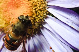 Hoverfly by luka567