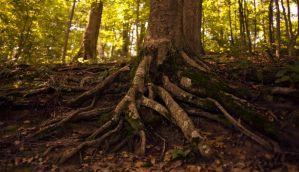 Tree Roots by RobertRobledo