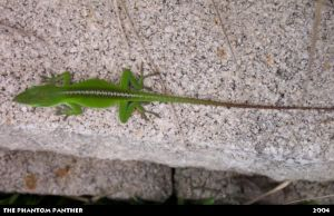 Lizard on a Rocky Surface 02 by phantompanther