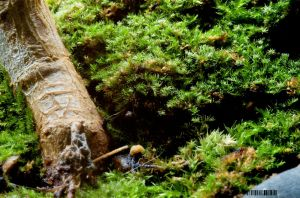 moss by airglow