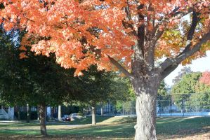 2014 Natural Autumn Color 25 by Miss-Tbones
