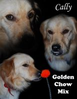 Golden Chow mix by Animal-and-anime-lvr