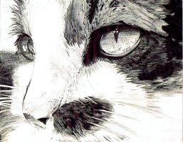 Ballpoint pen Cat by Eli150693
