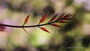 Leaf 2 by samantha4