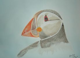 Puffin by xmaryxedgex