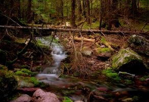 Out in the Forest by MyPhotoParadise