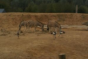 Colchester Zoo 17 by Living-Demon