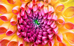 New iMac 2013, Flower Wallpaper, Retina Display by BG2009