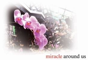miracle around us 02. by kevinandy