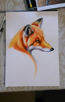 Watercolour Fox by EmiliaPaw5