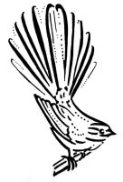 Fantail Print by PhilippaAnne