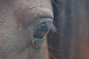 Horse eye by Karak-Crow