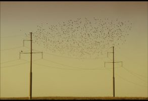 wired birds by veftenie