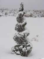 Snow-Covered Topiary Tree by FantasyStock