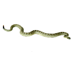 SNAKE PNG 3 by Moonglowlilly