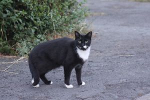 Black and White Cat 1 by lucky128stocks