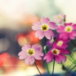 Blooming Spring by nhuthanh