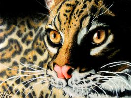 .:Ocelot - colored pencil:. by fenderbender368