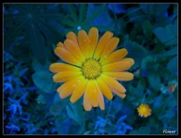 flower by motograph