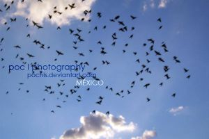 POC_FOTOS_DGO-MEXICO by pochis