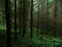 forest 35 by Pagan-Stock