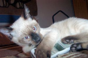 Nokia Cat 2 by Simba83