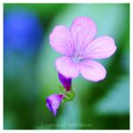 Little Darling by acutely