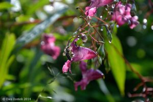 Droplets sparkle around me by Salvada