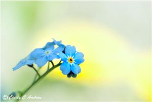 Forget Me Nots by CecilyAndreuArtwork