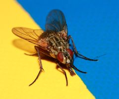 Fly in swedish colours by Proximax