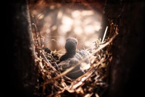 Nest by iorX