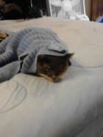 I can haz cover by zombiehedgehog