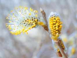 Spring in Lithuania 2015 by feniksas4