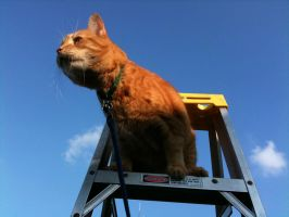 King of the Ladder by Inker-guy
