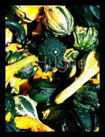 Autumn Gourds by lehPhotography