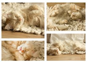 The many lazy faces of Pip by TammyPhotography