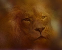 panthera leo by HippieVan57