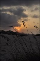 Sea Oat Sunrise by TThealer56