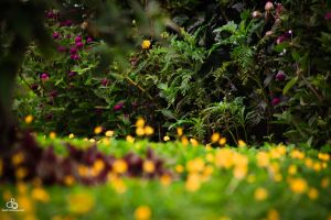 Unknown Garden by DraconPhotography