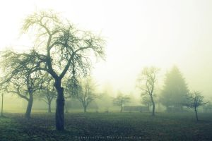 Godric's Hollow by Schnitzelyne